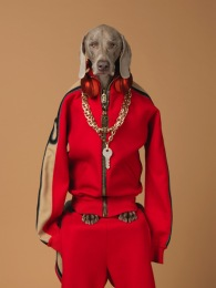 Risultati immagini per William Wegman Being Human - LAC Lugano